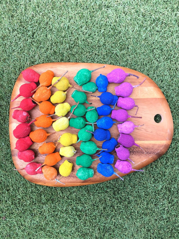 Rainbow gumnuts